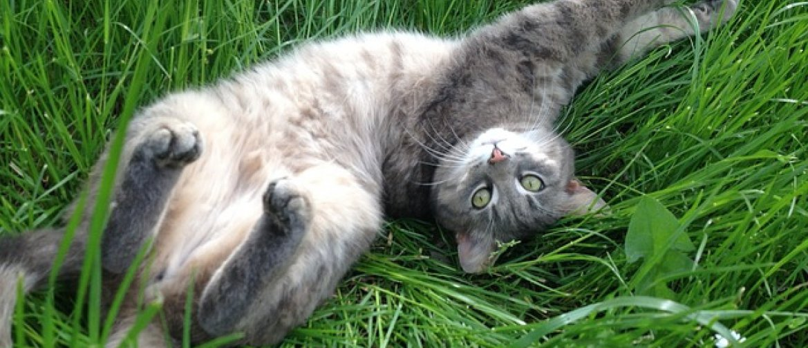 Why does your cat bury food? - connectingwithyou co uk