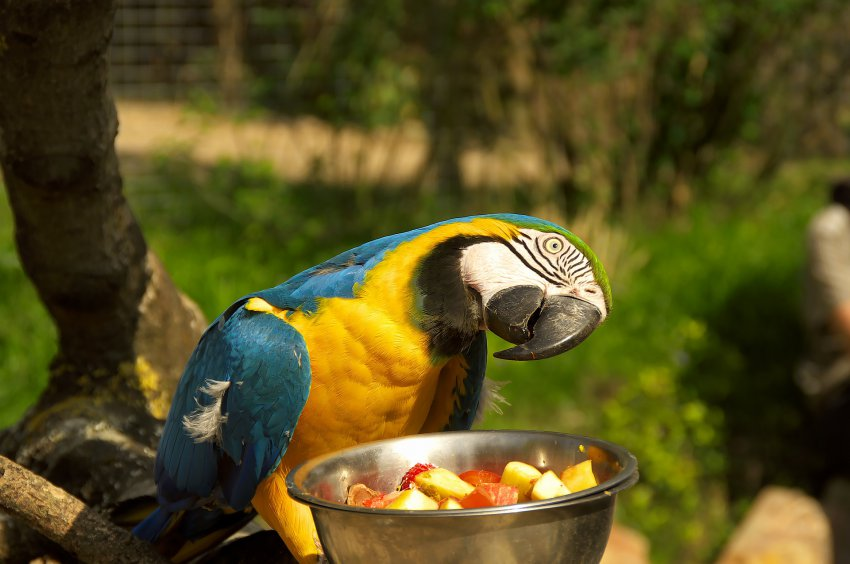 what to feed the parrot
